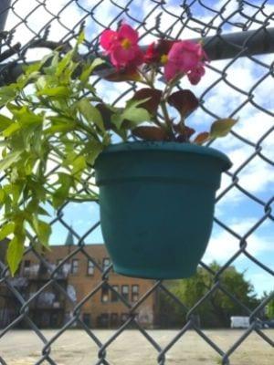 Des pots de fleurs sur la clôture de l'ancienne école Allion