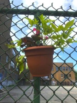 Des pots de fleurs sur la clôture de l'ancienne école Allion (mai 2021)
