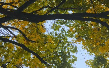 La canopée, le couvert des arbres