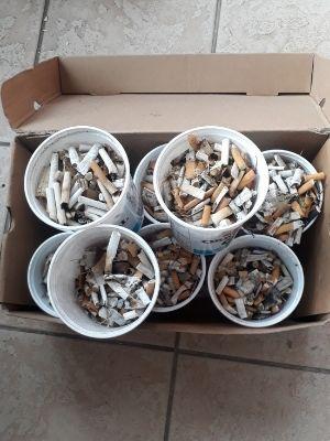 Mégots ramassés à l'issue d'une opération de nettoyage