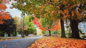 Parc René-Lévesque de Lachine à l'automne